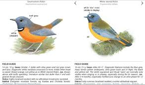 roberts multimedia birds of sa u2013 android apps on google play