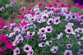 Plants Blooming How Do Flowers Know When To Bloom Bloom Time