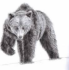 pencil drawings of bears black bear pencil drawings pencil