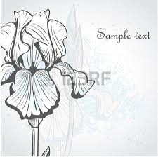 5 462 iris flower stock illustrations cliparts and royalty free