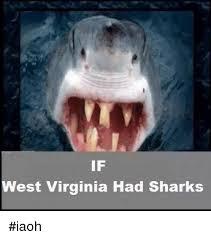 Funny Shark Meme - if west virginia had sharks iaoh funny meme on me me