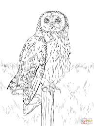snowy owl coloring page coloring print 4085