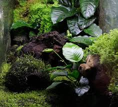 216 best terrariums images on pinterest plants gardening and
