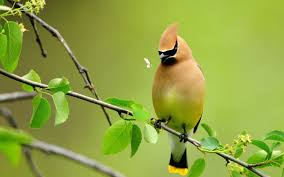 image of beautiful birds
