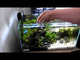 Small Tank Aquascaping Cleaning A Small Planted Tank Youtube