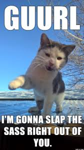 Sassy Cat Meme - sassy cat has had enough and is ready to snap the stupid out of the