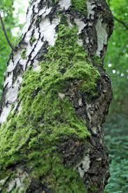 orange lichen on tree trunk everyday nature trails
