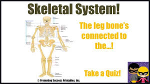 skeletal system human body skeleton science video for middle