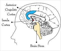 Role Of Brain Stem Seat Of Human Consciousness May Originate In The Brain Stem Region