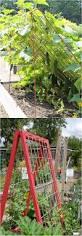 Vertical Veggie Garden 21 Easy Diy Garden Trellis U0026 Vertical Growing Structures Garden