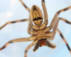 the 7 scariest spiders