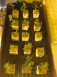 new home new 10 u0027x24 u0027 grow room 4kw flower 1kw veg grow