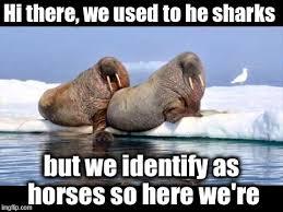 Gay Seal Meme Generator - lgbt imgflip