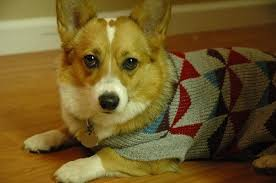a for sweaters mybusydog