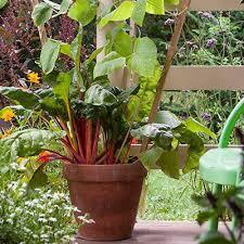 Gardening Pictures Gardening And Seed Saving Tips Seed Savers Exchange