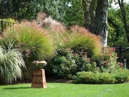 246 best garden of shrubs grasses evergreens trees images on