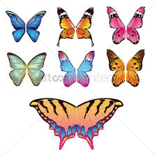 collection of butterfly wing designs vector image 1875238