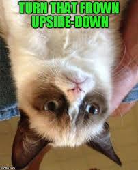 Meme Generator Cat - grumpy cat no meme generator alleghany trees