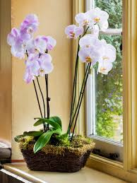 in door plant put in pot vide how not to kill your orchid hgtv