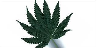 buy edible cannabis online indica strains buy marijuana online cannabis online dispensary