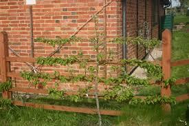 sussex fruit trees brighton hawkhurst eastbourne hastings