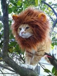 Lion Halloween Costumes Dogs 8 Pet Halloween Costume Ideas