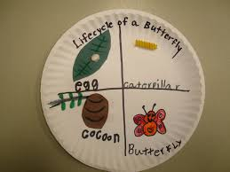 caterpillar activity plate leaf insects and their homes match