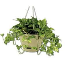 Hanging Indoor Planter by Hanging Planters You U0027ll Love Wayfair