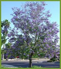 20 best flowering trees images on flowering trees