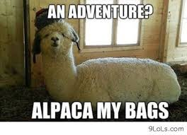 Alpaca Sheep Meme - awesome pictures cool b quotes b daily b quotes b funny