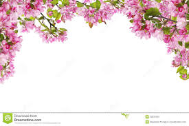 apple tree bloom wallpapers photo collection com branch pink flowers