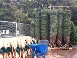 guide where to buy a tree in redwood city redwood