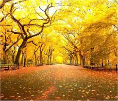 places nyc fall foliage