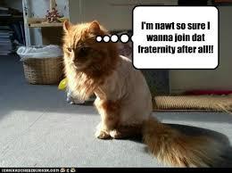 Nude Memes - kappa alpha tau lolcats lol cat memes funny cats funny cat