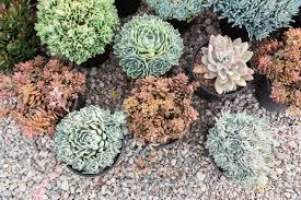 plant portrait succulents