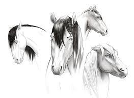 horse face sketches u2014 weasyl