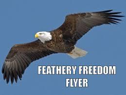 Freedom Eagle Meme - freedom eagle know your meme mne vse pohuj