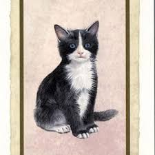 cards with cats ilpapiro