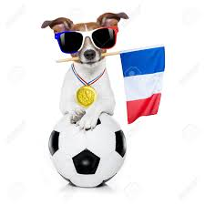 French Flag Background France Football Championship Jack Russell Dog With Soccer Football