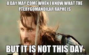Aragorn Meme - awesome 20 aragorn meme testing testing