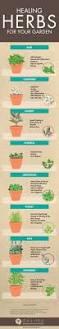 How To Plant A Garden In Your Backyard Best 25 Grow Avocado Tree Ideas On Pinterest Where Do Avocados
