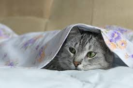 Bed Bugs On Cats How To Get Rid Of Germs On Your Bed Sheets Digital Trends