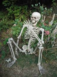 Halloween Decoration Props Uk by Life Size Skeleton Halloween Prop Decoration 5 5ft Amazon Co Uk