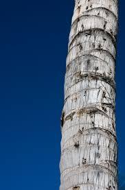 unbleaching tree bark fixing faded bark on trees