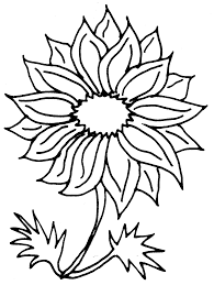 sunflower pencil drawing clipart panda free clipart images