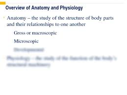Human Anatomy And Physiology Notes Printable Powerpoint Lecture Notes 1 Pptx Anatomy U0026 Physiology
