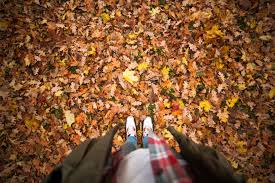 person standing on a ground with dry leaves free stock photo
