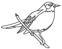 american robin coloring download american robin coloring