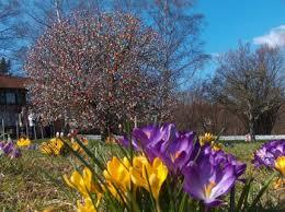 easter egg trees the volker easter egg tree home and garden