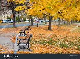 Park Bench Scene Autumn Scene Park Near Fenway Street Stock Photo 88173529